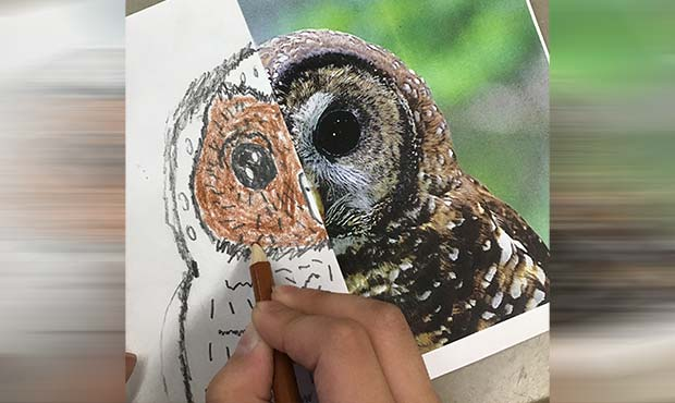 Drawing an owl over a photo